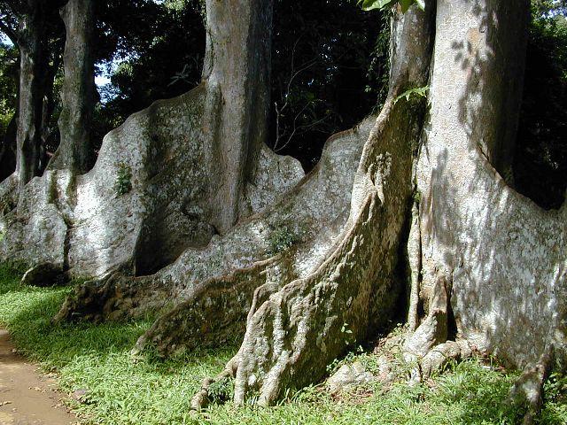 Sri Lanka Fotos Botanischer Garten In Kandy